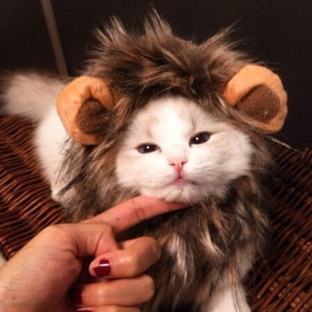 Funny Cute Pet Cat Costume Lion Mane Wig Cap Hat for Cat Dog Halloween Christmas Clothes Fancy Dress with Ears Pet Clothes 1