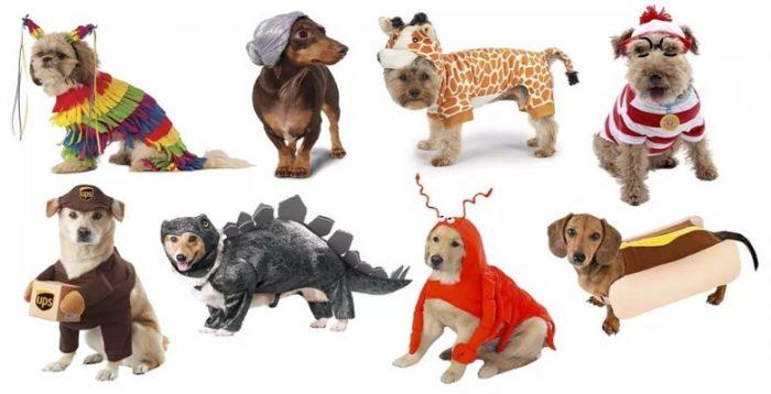 Dog costumes options